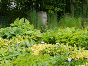 Die Hosta-Verkaufsfläche bei der Gärtnerei Extragrün