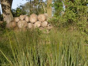 Die Verkaufsfläche für Gräser in der Gärtnerei Extragrün