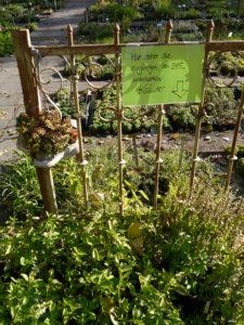 Schilder sind Beratungshilfen in der Staudengärtnerei Extragrün