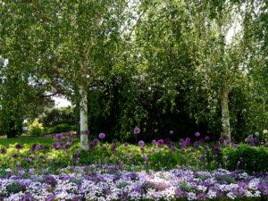 Blumenband vor Birken, Park der Gärten