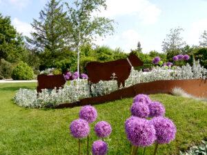 Stachys byzantina, Allium und Cortenstahl im Park der Gärten, Bad Zwischenahn