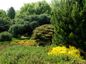 Der Heidegarten im Park der Gärten, Bad Zwischenahn