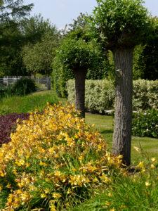 Kopfweiden, Park der Gärten, Bad Zwischenahn