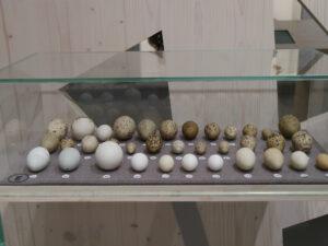 Vogelausstellung im Park der Gärten, Bad Zwischenahn