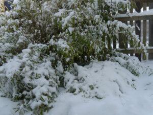 Winter im Vorgarten von Wurzerlsgarten