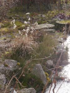 Der Teichrand Mitte Februar in Wurzerlsgarten