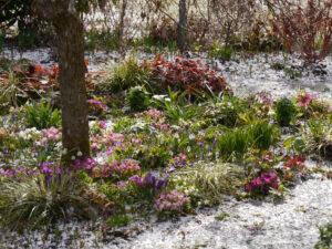 Das Frühlingsbeet in Wurzerlsgarten nach einem Hagelschauer