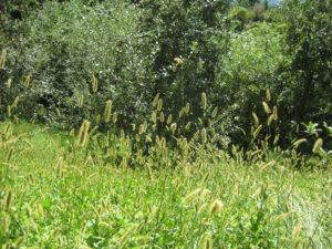 In Südtirol zuhause fühlt man sich in diesem Parkteil mit einheimischen Wiesen und Bauerngärtchen, Trauttmansdorff, Meran
