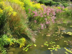 Die Uferlandschaft im Wassergarten der Trauttmansdorffer Gärten, Meran