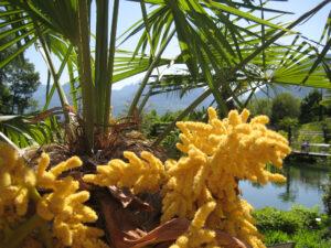 Exoten im Wassergarten der Trauttmansdorffer Gärten, Meran