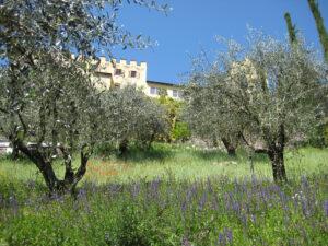Olivenhain unter Schloss Trauttmansdorff, Meran
