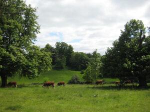 Parklandschaft neben dem Hauptzugang von Greys Court
