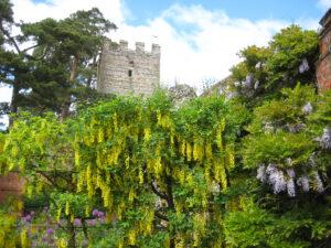 Der große Garten ist ummauert, die alten Ruinen aus der Tudor Zeit sind mit eingebunden in Greys Court