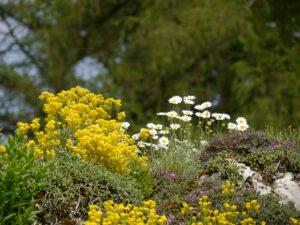 Es blüht überreich im Alpinum des Botanischer Garten München