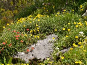 Alpinum des Botanischen Gartens München