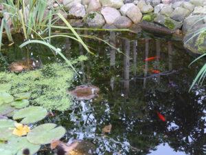 Teich im Zwergenland im Landhausgarten Hantelmann
