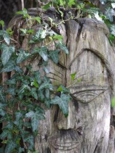 Der Birkenmann wird von Efeu erobert in Wurzerlsgarten