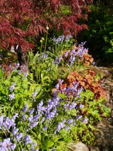 Die Ahornecke mit dem Frühlingsbeet in Wurzerlsgarten