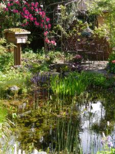 Blick über den Teich zum Insektenhotel, dem Rosenrondell und der Rhododendronsenke in Wurzerlsgarten