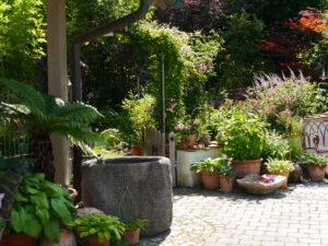Rosen- und Clematisgarten, Vorgarten, Halwax