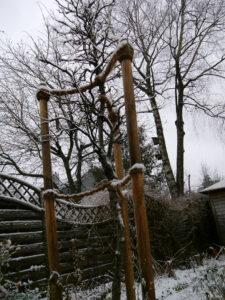 Der Blauregenbaum im Winter