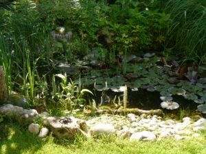 Teich im Rosen- und Clematisgarten Halwax