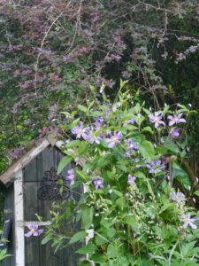 Teichhäuschen, Rosen- und Clematisgarten Halwax