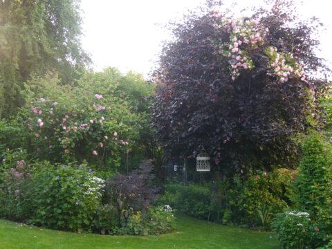 Rosen- und Clematisgarten Halwax, Niederbayern