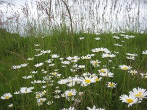 Blumenwiesen bilden einen schönen Kontrast zum makellosen Rasen.
