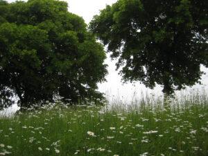 Blumenwiese im Park von Cliveden