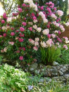 Der Bachhügel mit der Rhododendronsenke dahinter in Wurzerlsgarten