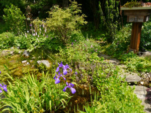 Blick vom Ahorneck über den Teich