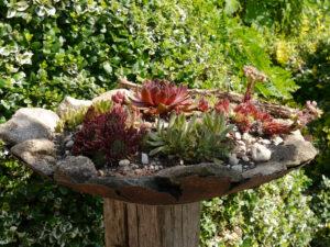 Dekoschale mit Sempervivum, Garten Josefine Heinze, Grattersdorf