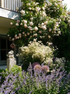 Rosa 'Bouget Parfait', Nepeta 'Walkers Low', Clematis recta 'Purpurea', Allium, Garten Josefine Heinze, Grattersdorf
