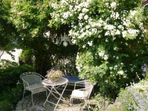 Rose 'Guirlande d'Amour', Rosengarten Josefine Heinze, Grattersdorf,