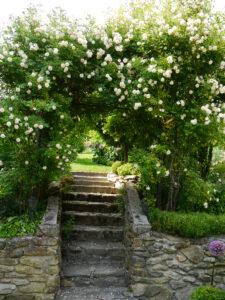 Rosa 'Ghislaine de Feligonde', Aufgang in den oberen Garten Josefine Heinze, Grattersdorf