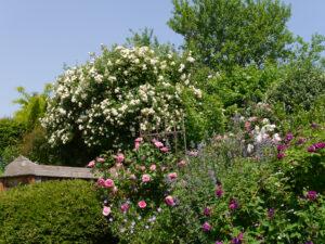 Rosengarten Josefine Heinze, Grattersdorf