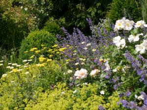 Rosa 'Sally Holmes', Achillea, und Alchemilla mollis im Garten Josefine Heinze, Grattersdorf