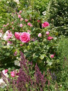 Rosen, Stauden, Sträucher und Bäume, es nimmt kein Ende im Garten Josefine Heinze, Grattersdorf.