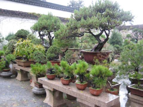 Blick in eine Bonsai-Baumschule in Suzhou