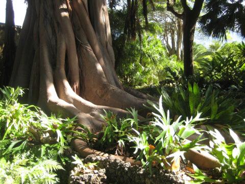 Botanischer Garten, Santo Domingo, Dominikanische Republik