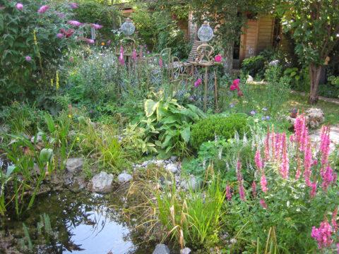2. Platz Besonders wichtig ist in meinem Garten der Chelsea Chop im Mixed Border rund um den Teich in Wurzerlsgarten