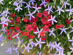 Die Seele braucht Farben, Chiemgau-Kaktus, Michael Kießling