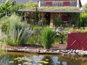 Natur-Schwimmteich, bepflanztes Pergoladach beim Chiemgau-Kaktus