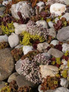Ein Steingarten mit vielen Sukkulenten begleitet den Weg entlang des Schwimmteichs