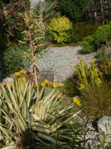 Opuntia ellisiana 'Alois Smrczek' und Yucca filemanetosa 'Variegata', Chiemgau-Kaktus