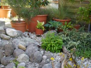 Ein Schatteneck beim Chiemgau Kaktus