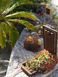 Mauerkronen bei Chiemgau-Kaktus