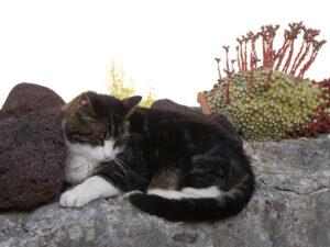 Franzi genießt die Nachmittagssonne auf der Mauer, Chiemgau Kaktus