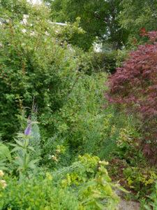 unbegehbar Weg vom Garten auf Terrasse in Wurzerlsgarten